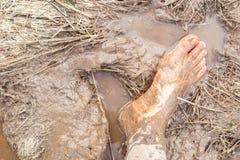 Modderige voeten in het padieveld royalty-vrije stock fotografie