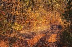 Modderige weg in het bos Stock Foto's
