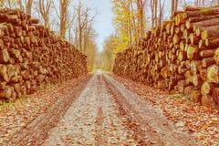 Modderige weg in nevelig bos stock foto's