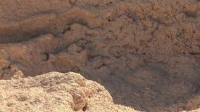 Modderpotten in Yellowstone stock footage