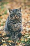 Mode de vie extérieur d'émotions tristes sans abri de Gray Cat Photos stock