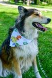 Modecolliehund royaltyfria foton
