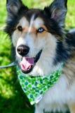 Modecolliehund royaltyfri bild