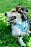 Modecolliehund fotografering för bildbyråer