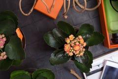 Modedame eingestellt mit Duft und Blume um schwarzen Hintergrund stockfotografie