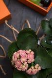 Modedame eingestellt mit Duft und inländischen Blumen um schwarze Hintergründe stockbilder