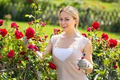 Młodej żeńskiej ogrodniczki troskliwe róże Obraz Stock