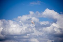 Model airplane stunt plane spinning royalty free stock photos