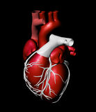 Model of artificial human heart Royalty Free Stock Photos