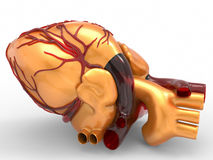 Model of artificial human heart 3d rendering Stock Image