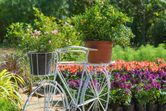 Model of bicycle equipped with basket of flowers in the garden Stock Image