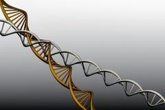 Model 3 D van verdraaide DNA. Stock Afbeeldingen