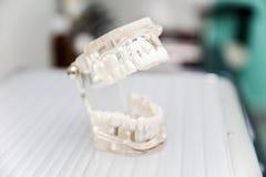 Model dentures in dental office Stock Photo