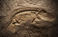 Model Dinosaur fossil Royalty Free Stock Photo