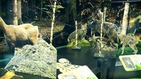 Model Dziki i dzikie zwierzęta zbiory wideo