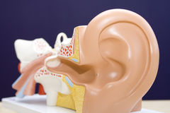 Model of ear Royalty Free Stock Photography