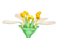 Model of flower with stamens and pistils on white background Stock Photography