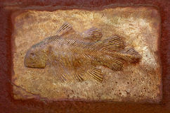 The Model fossil of ancient fish Stock Photo