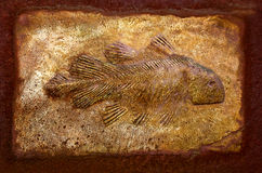 The Model fossil of  fish Stock Photos