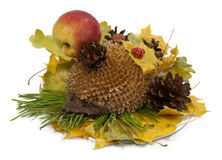 Model of hedgehog. Hedgehog in the Autumn forest. Handicraft from natural pieces Royalty Free Stock Images