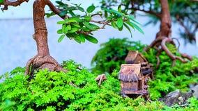 Model homes bonsai tree Stock Photo