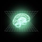 Model of the human brain. Stock Image