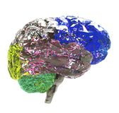 Model of human brain i. Solated on white background Royalty Free Stock Photos