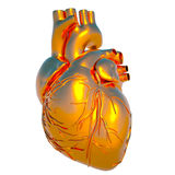 Model of human heart Stock Photo