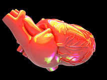 Model of  human heart Stock Images