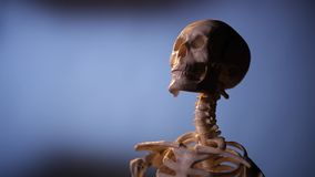 Model of human skeleton. In laboratory used for teaching stock footage