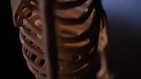 Model of human skeleton. In laboratory used for teaching stock video