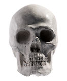 Model of a human skull isolated on white Stock Photography