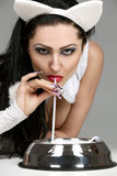 Model in latex white cat costume drinking milk Stock Image