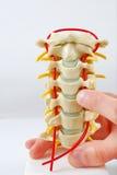 model pekande rygg för finger Royaltyfri Fotografi