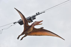 Model of pteranodon Stock Photography
