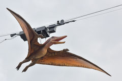 Model of pteranodon. Model of pteranod on sling Stock Photography