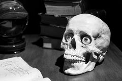 Realistic model of the human skull with eyes stock image