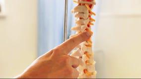 Model of the spine. Medical doctor showing model of the spine. Backbone with vertebrae stock video