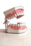 model tänder Fotografering för Bildbyråer