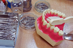 Model teeth  Royalty Free Stock Image