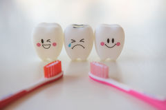 Model toys teeth in dentistry on a white background. Stock Images