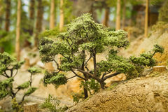Model trees Stock Image