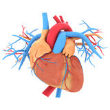 Model van hart Stock Foto's