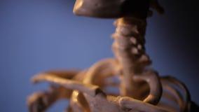 Model van menselijk skelet stock footage