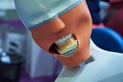 Model voor de tand therapeutische procedures van het onderwijsstudenten royalty-vrije stock foto