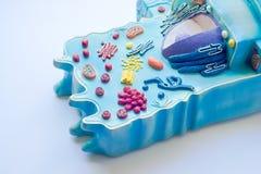 Model zwierzęca komórka zdjęcie royalty free