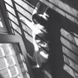 Modelado del alog del gato Fotos de archivo