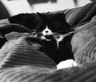 Modelado del gato del smoking imagenes de archivo
