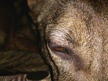 modelado del perro Foto de archivo