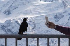 Modelando o pássaro para ser fotografada Fotos de Stock